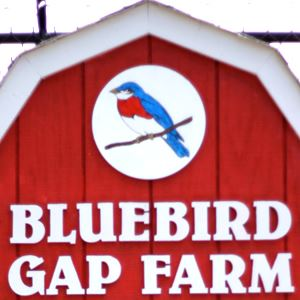 bluebird gap 300 square