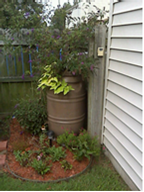Rain Barrel connected to house